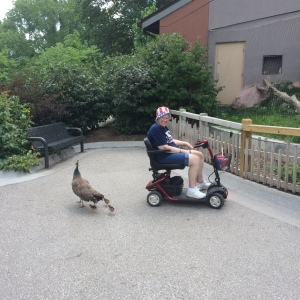 Mom on Scooter at Omaha Zoo Summer 2014