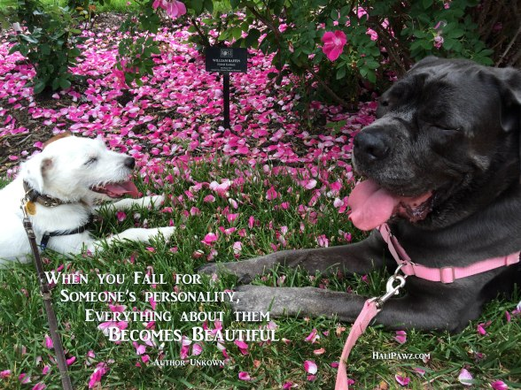 dogs, flowers, relationships