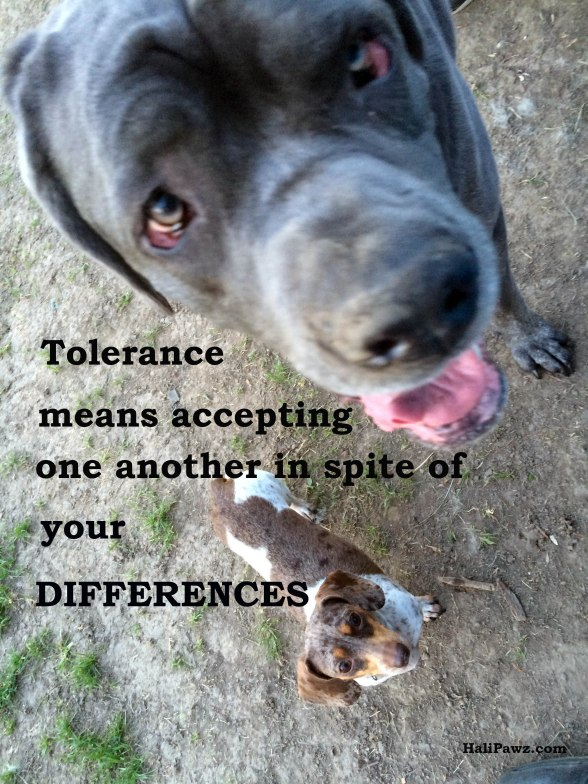 dogs, dachshund, mastiff, tolerance, differences