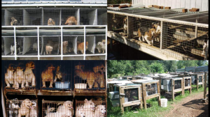 puppy mills, ozarks, dogs in cages
